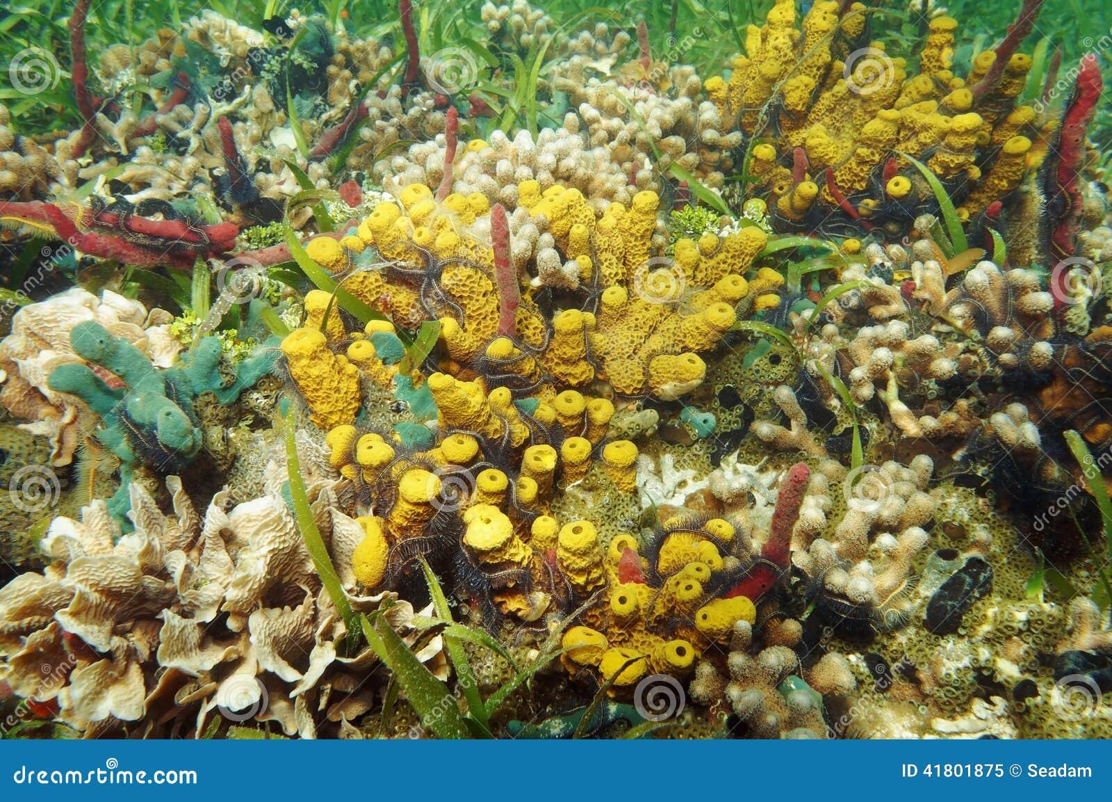 Caribbean Sea Animal Life: Colorful Underwater Marine Life Of Caribbean Sea Stock