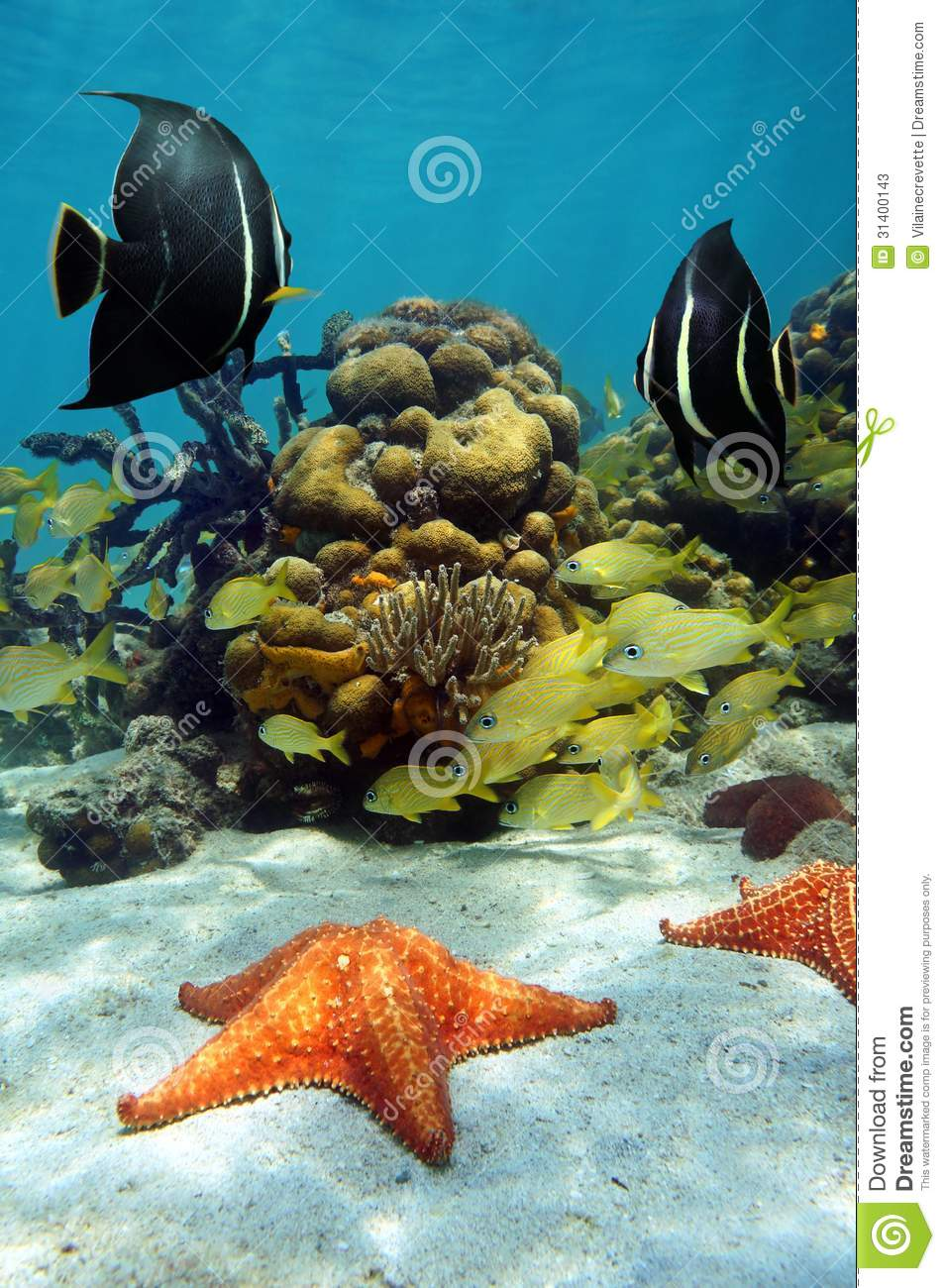 Colorful Marine Life Underwater On A Shallow Coral Reef ... |Colorful Underwater Life