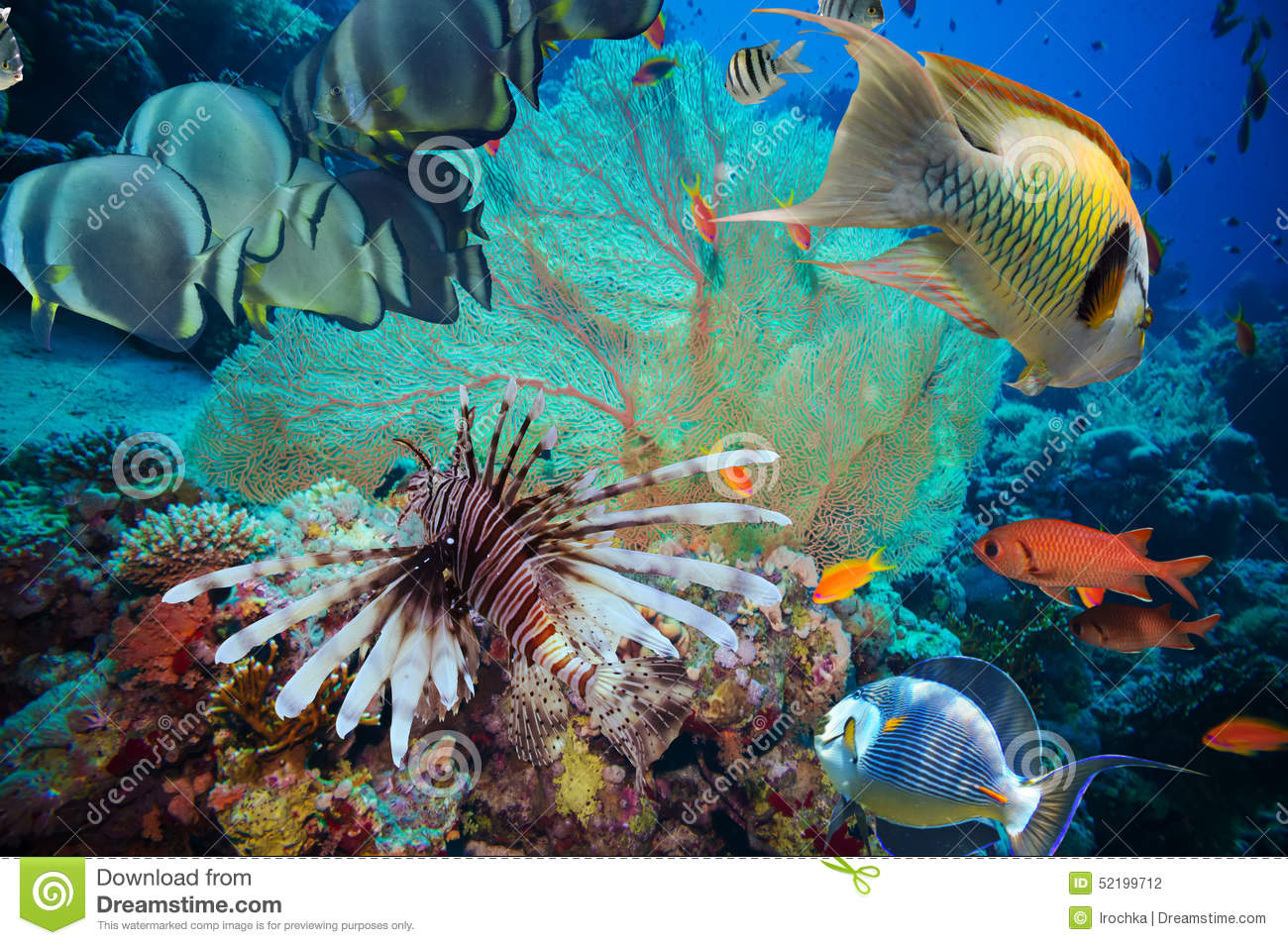 Colorful underwater reef with coral and sponges stock for Dream of fish swimming