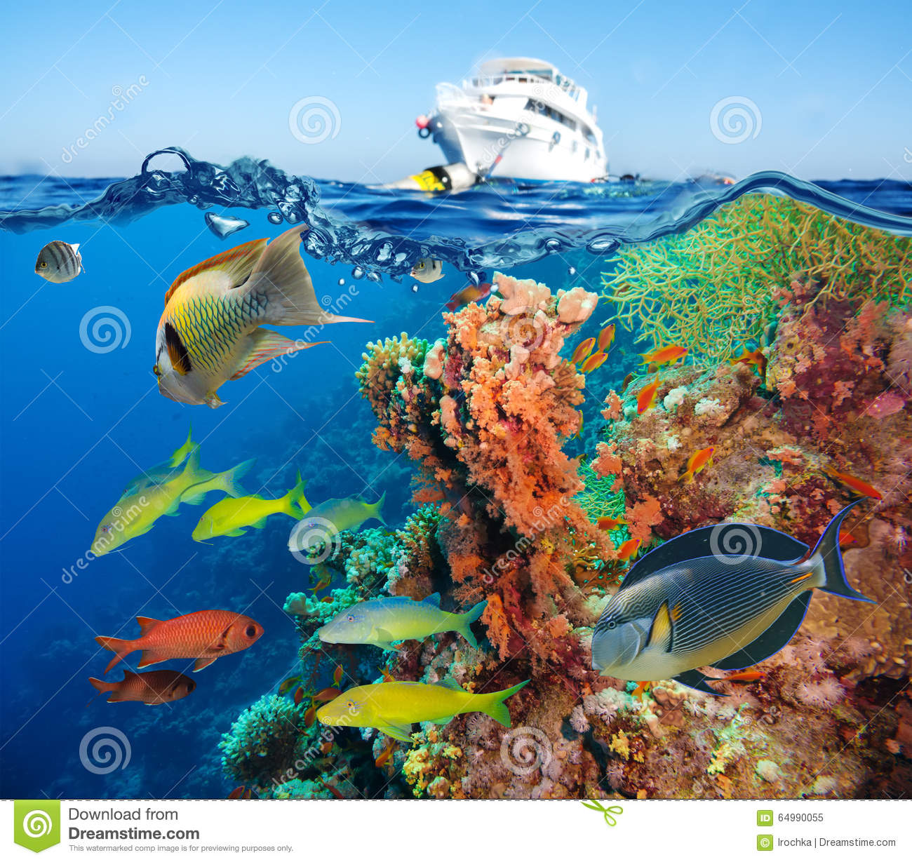 Colorful underwater reef with coral and sponges stock for Small tropical fish