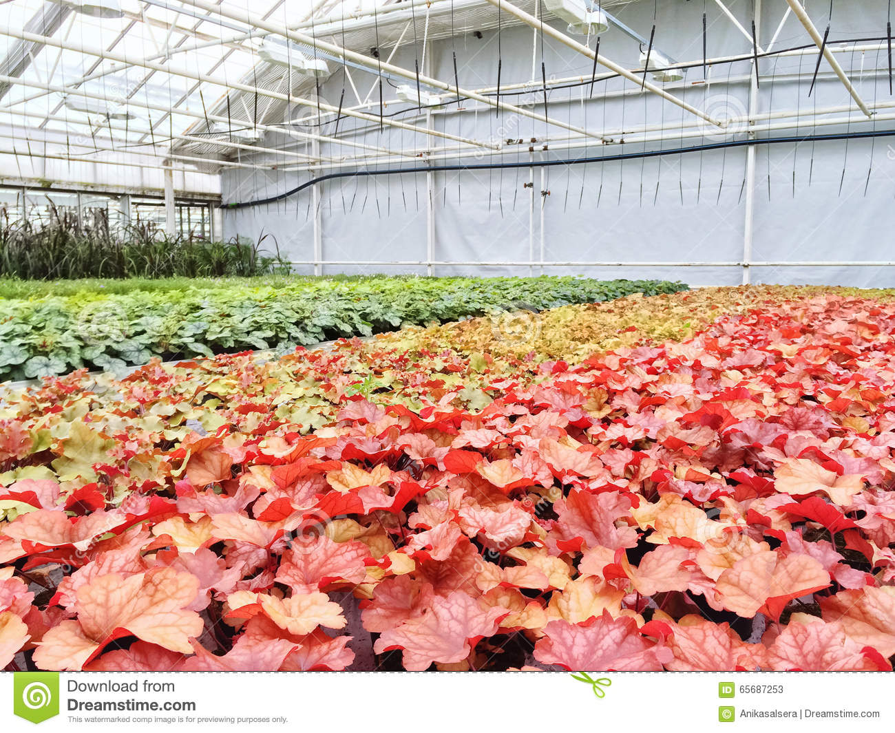 Colorful Variety Of Plants In A Garden Center Stock Photo