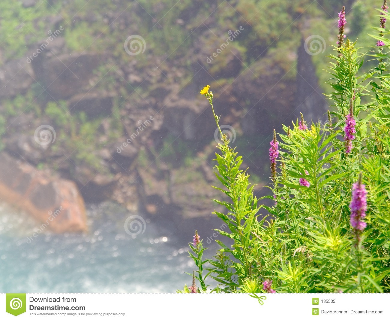 Colorful Weeds In Foreground Set Against Scenic Background Stock