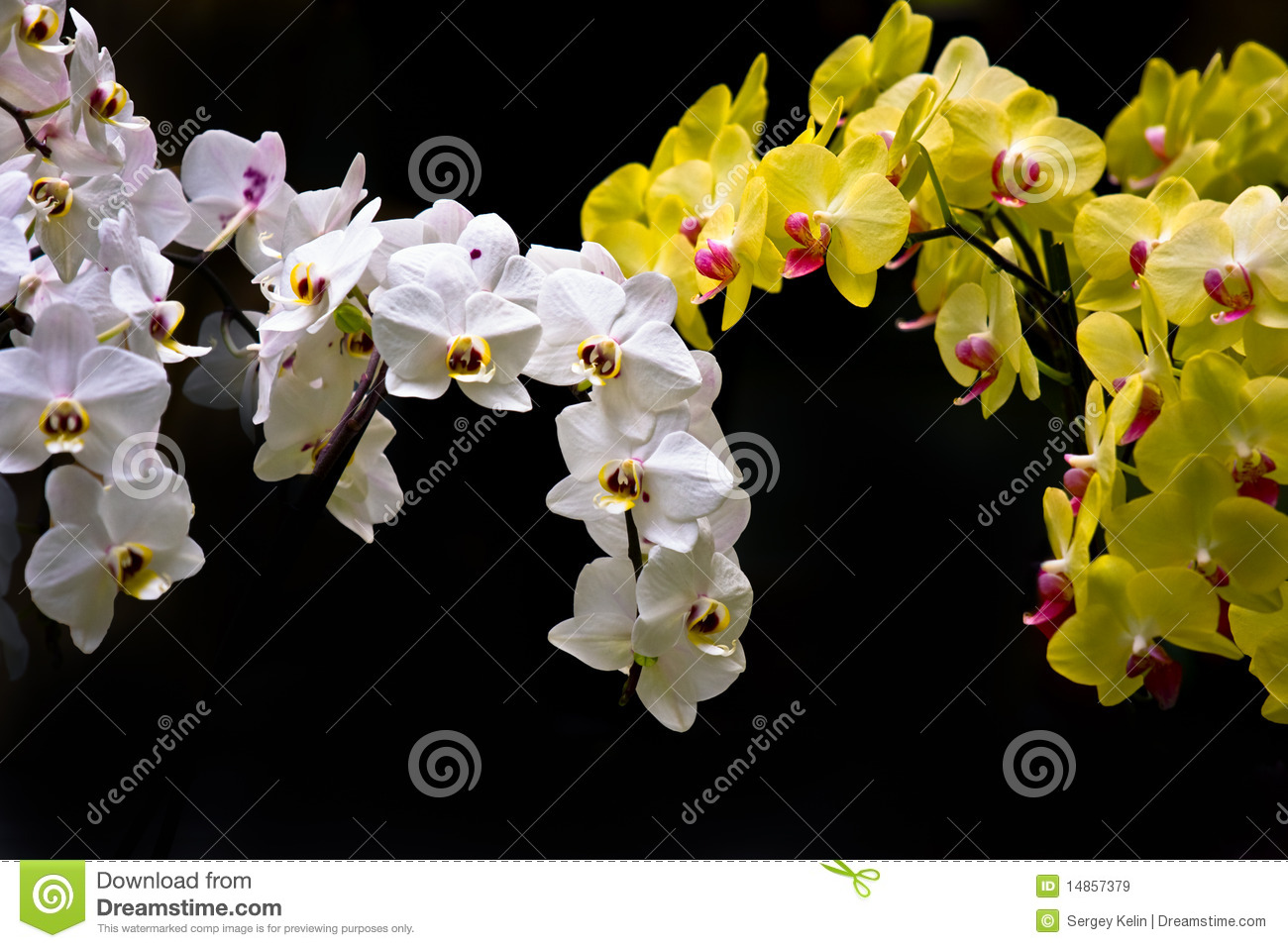 Colorful white and yellow orchids