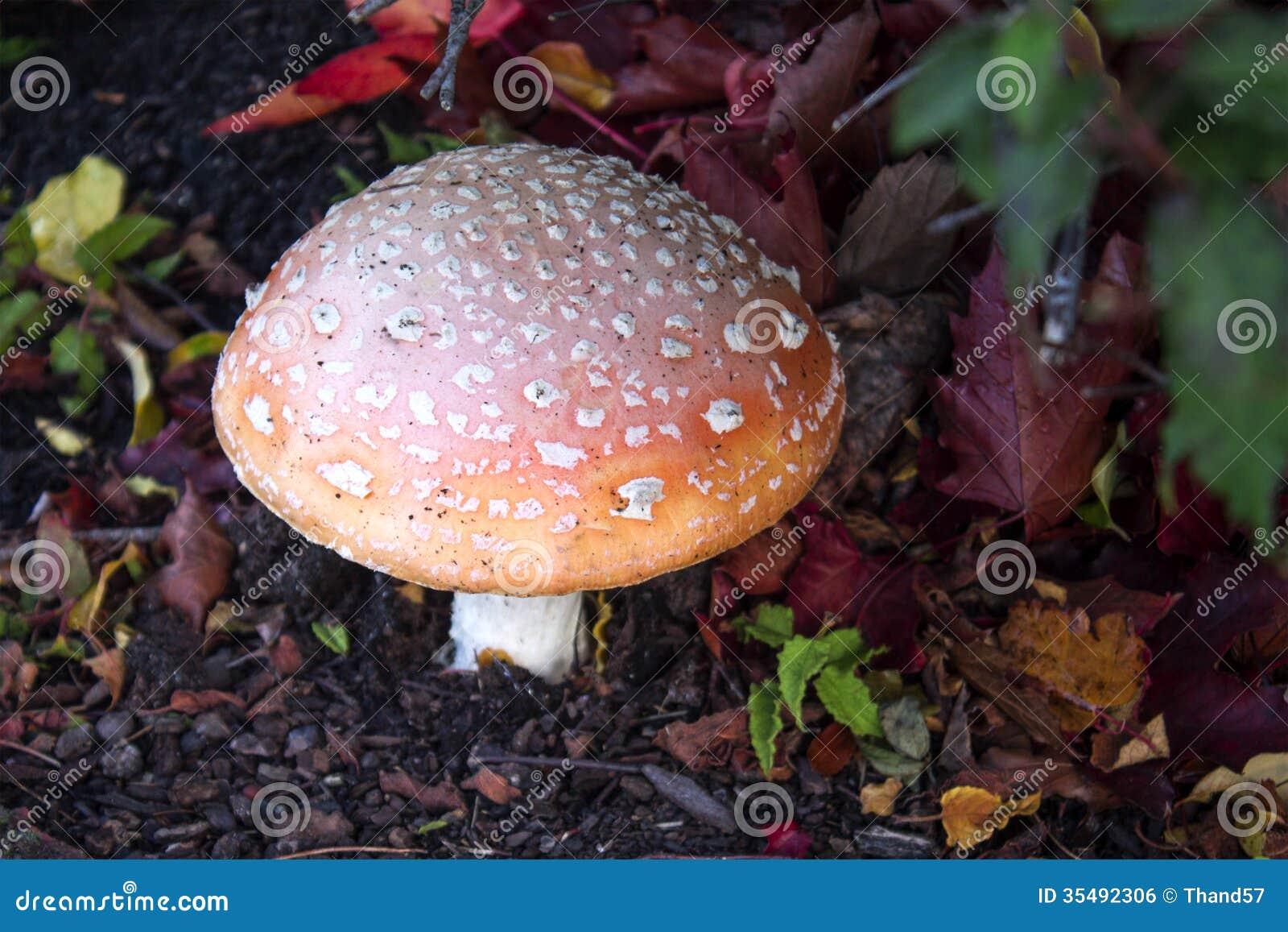Colorful wild Mushroom