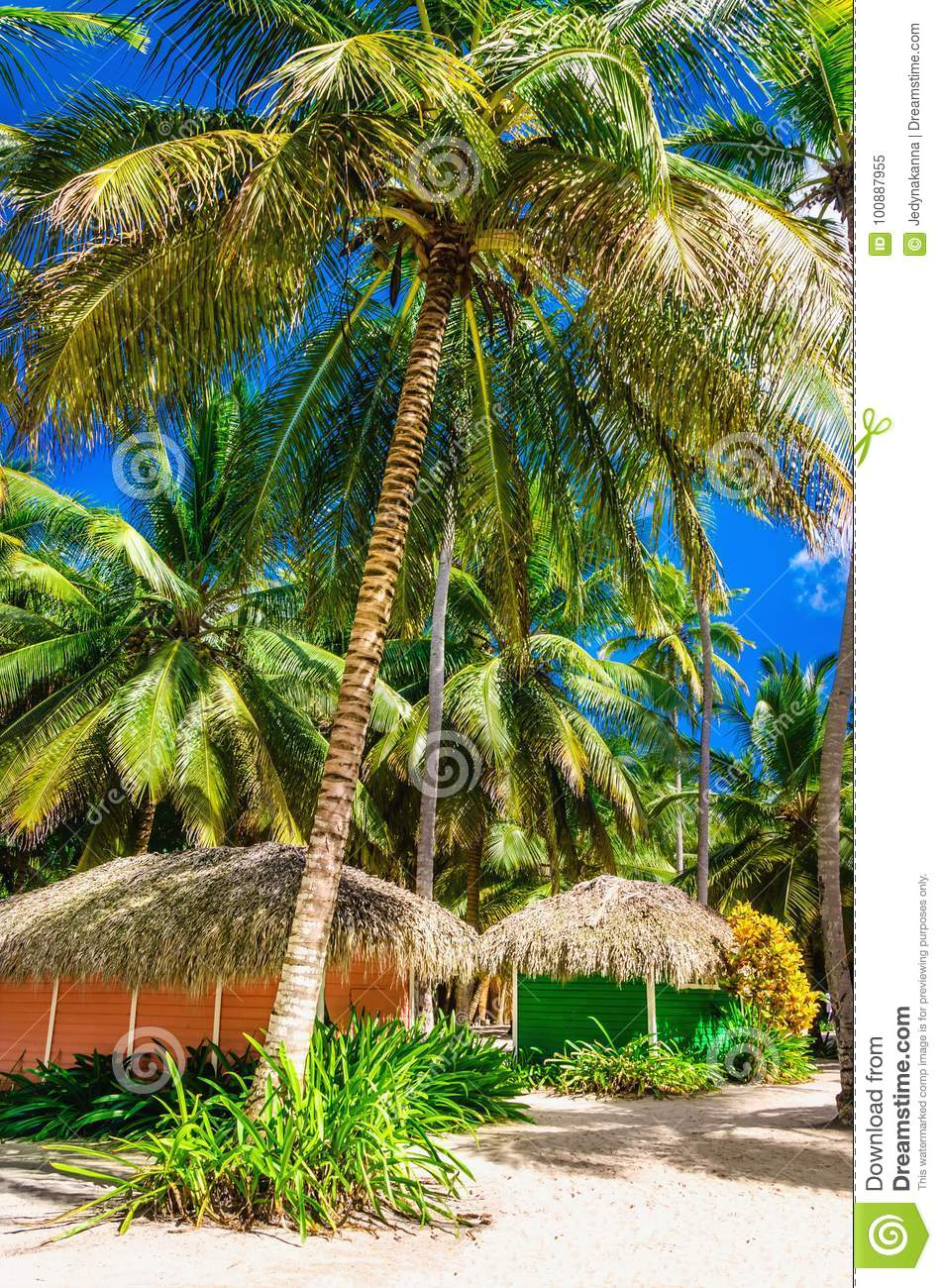 Colorful Wooden Huts Hidden Among The Tall Palm Trees Dominican ...