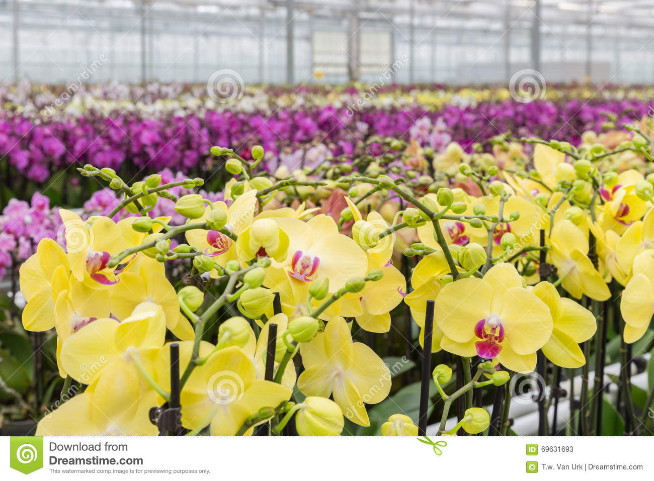 Flowers Growing In Foil Hothouse Garden Center Stock Image