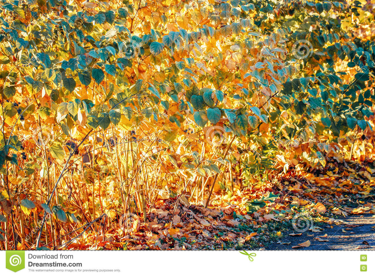 Colorful yellow red autumn fall leaves on tree branches, bushes, fall season, card wallpaper, textured background