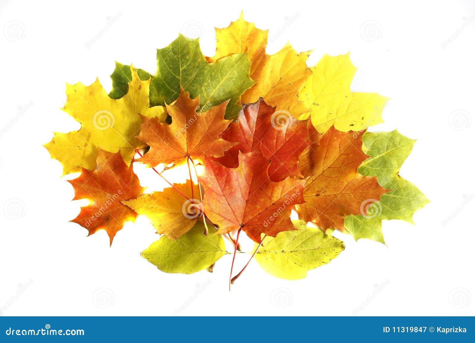 Colorfull Herbstblätter getrennt auf dem weißen BAC