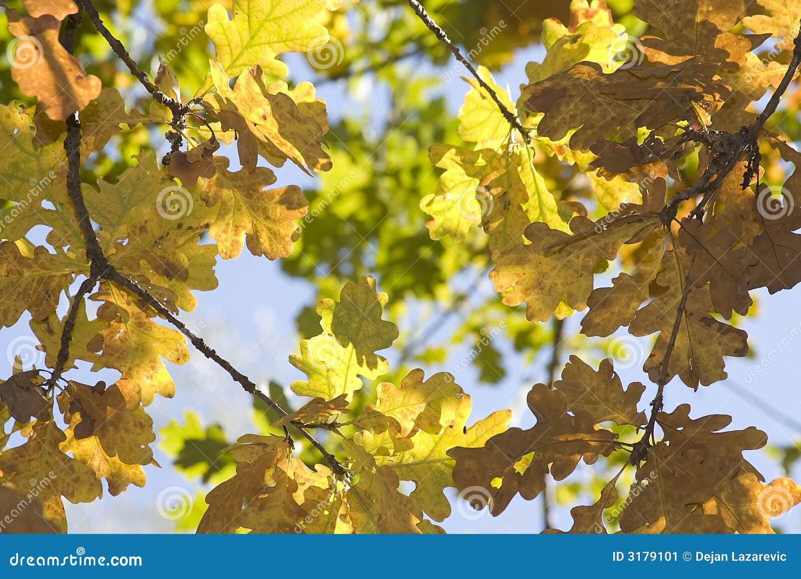 Colori di caduta immagine stock immagine di estremit - Immagine di terra a colori ...