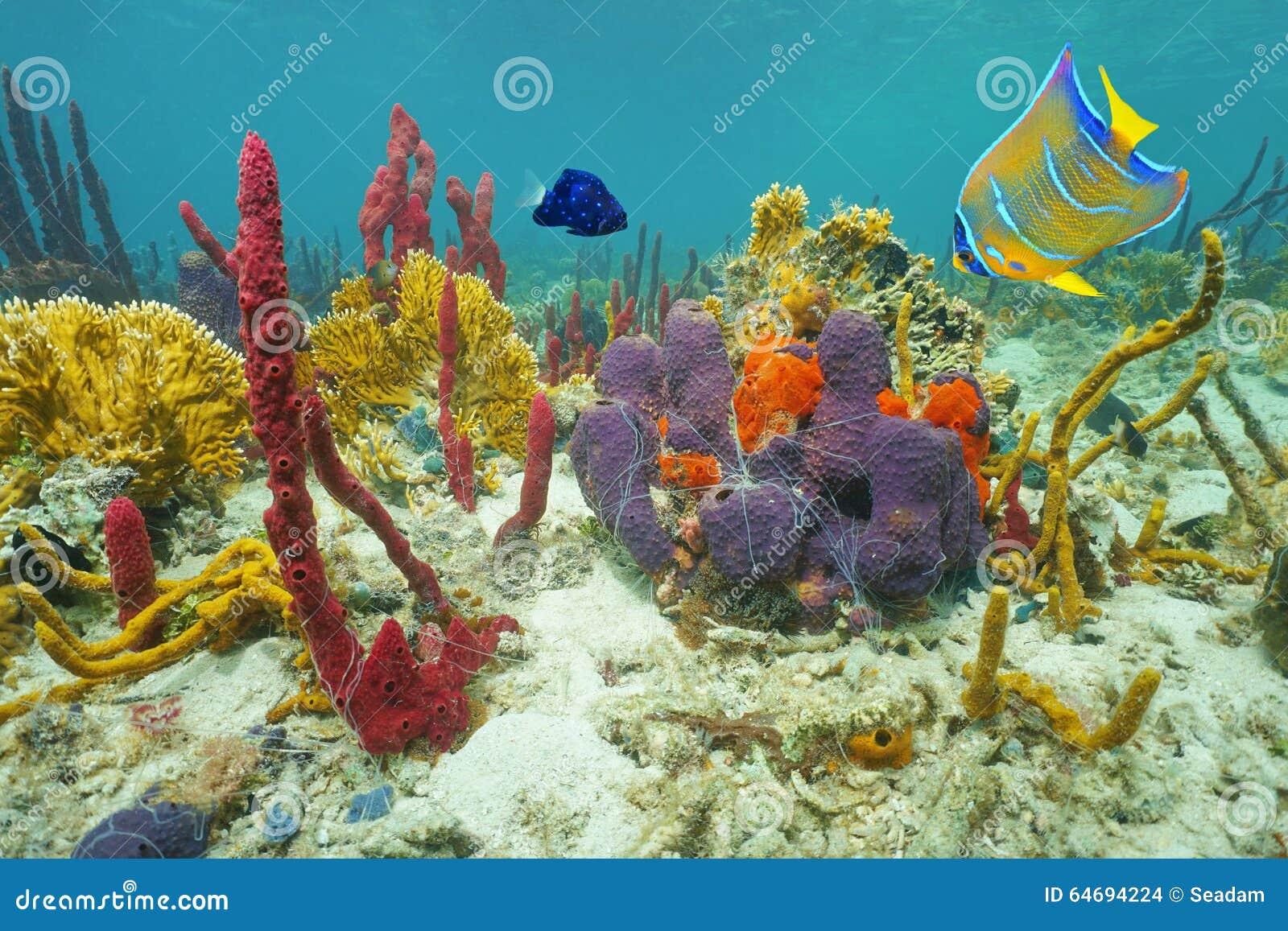 Immagini Di Tartaruga Marina A Colori Immagini Da Colorare