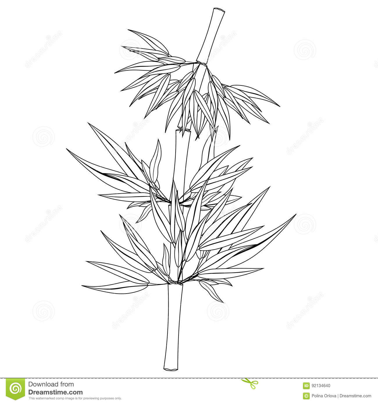 Picture of: Coloring Bamboo Tree Tropical China Japan Vector Illustration Stock Vector Illustration Of Chinese Drawing 92134640