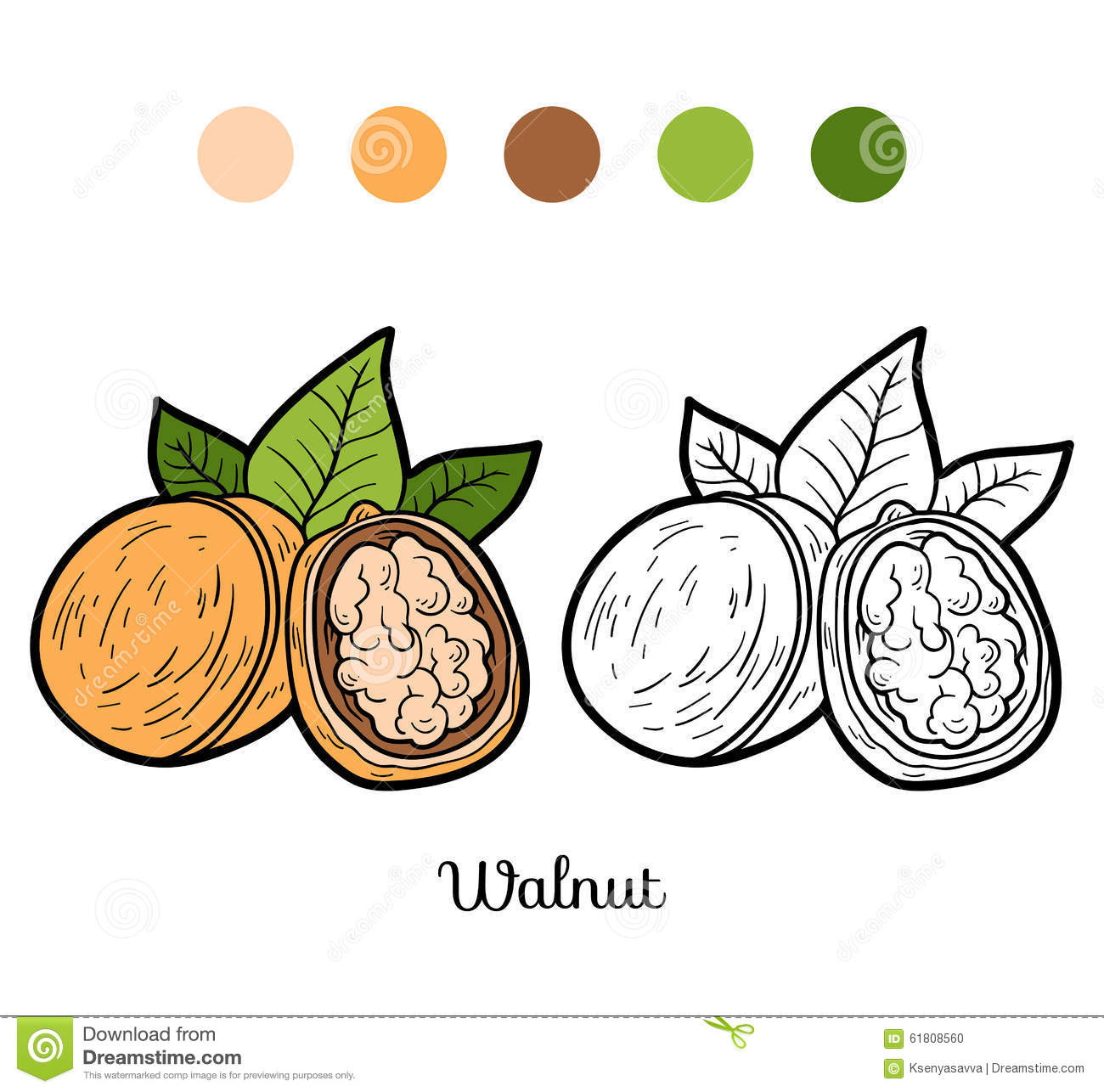 Coloring book pictures of vegetables - Coloring Book For Children Fruits And Vegetables Walnut Stock Photo