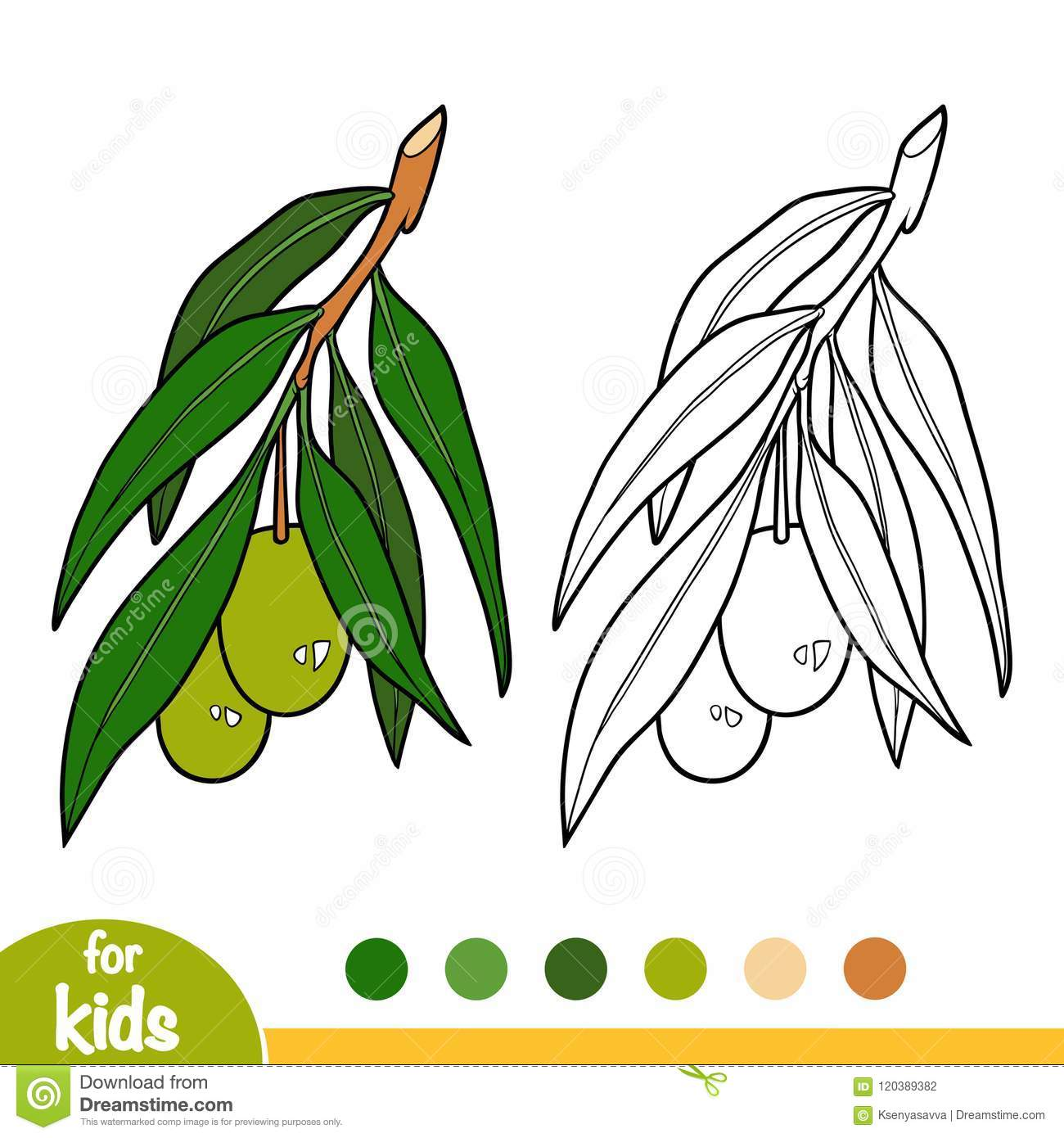 Coloring Book, Olive Tree Branch Stock Vector - Illustration of ...