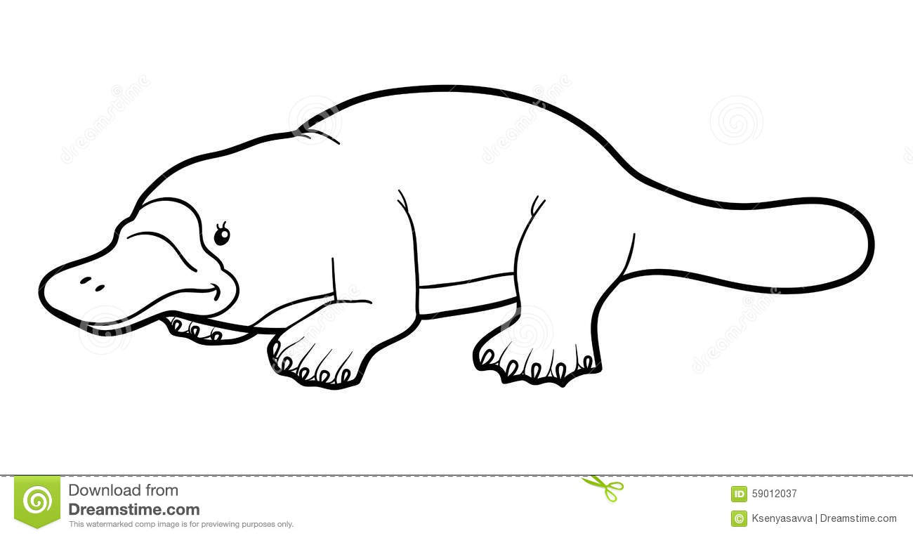 Coloring Book For Children Platypus Stock Vector Image