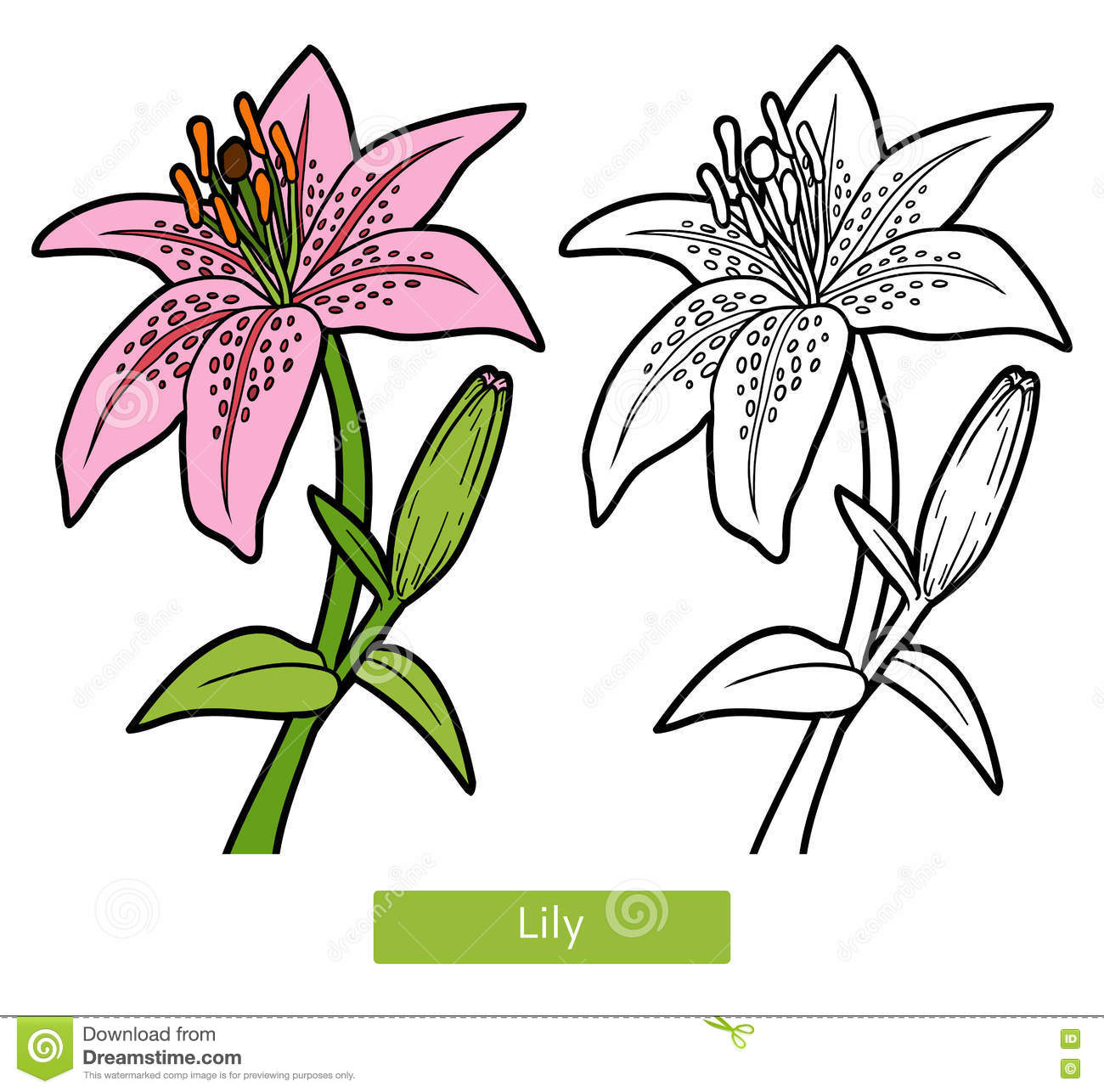 Download Coloring Book Flower Lily Stock Vector Illustration Of Blossom