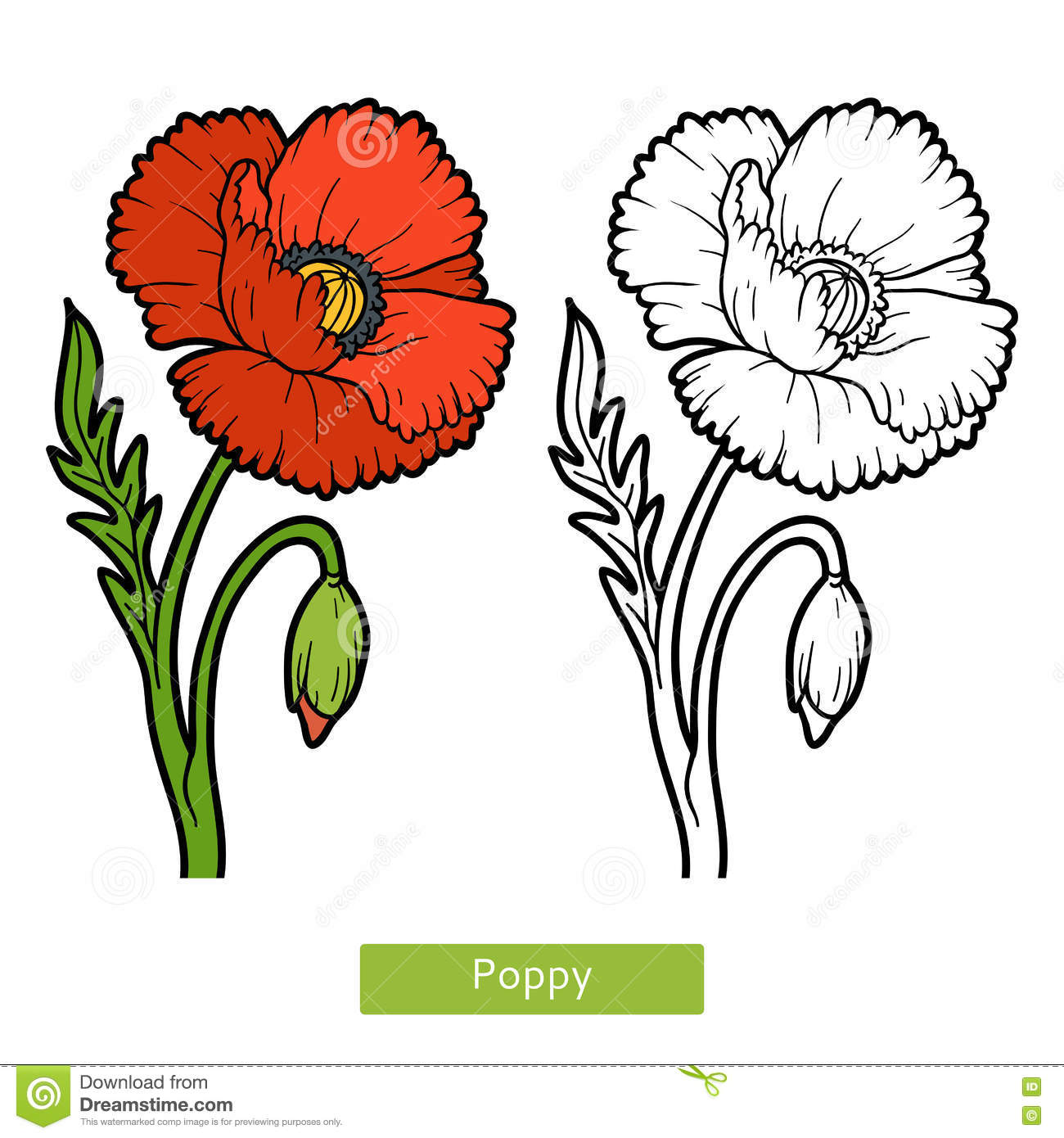 Coloring Book, Flower Poppy Stock Vector - Illustration of colorful ...