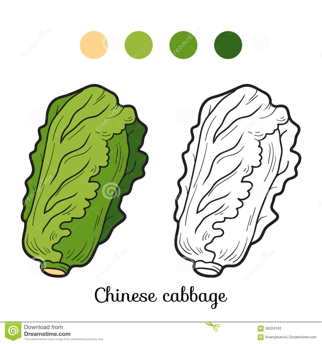 Coloring book pictures of vegetables - Coloring Book Fruits And Vegetables Chinese Cabbage Stock Photography