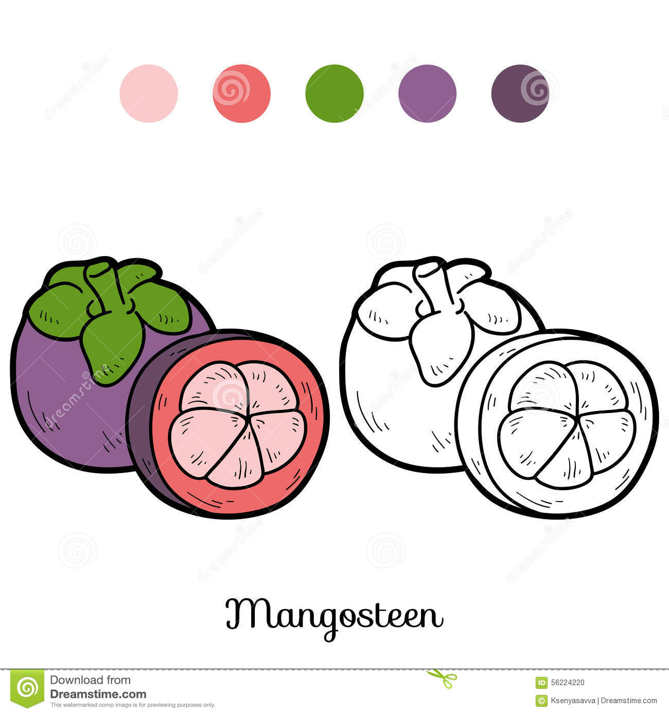 Coloring Book Fruits And Vegetables Mangosteen Picture