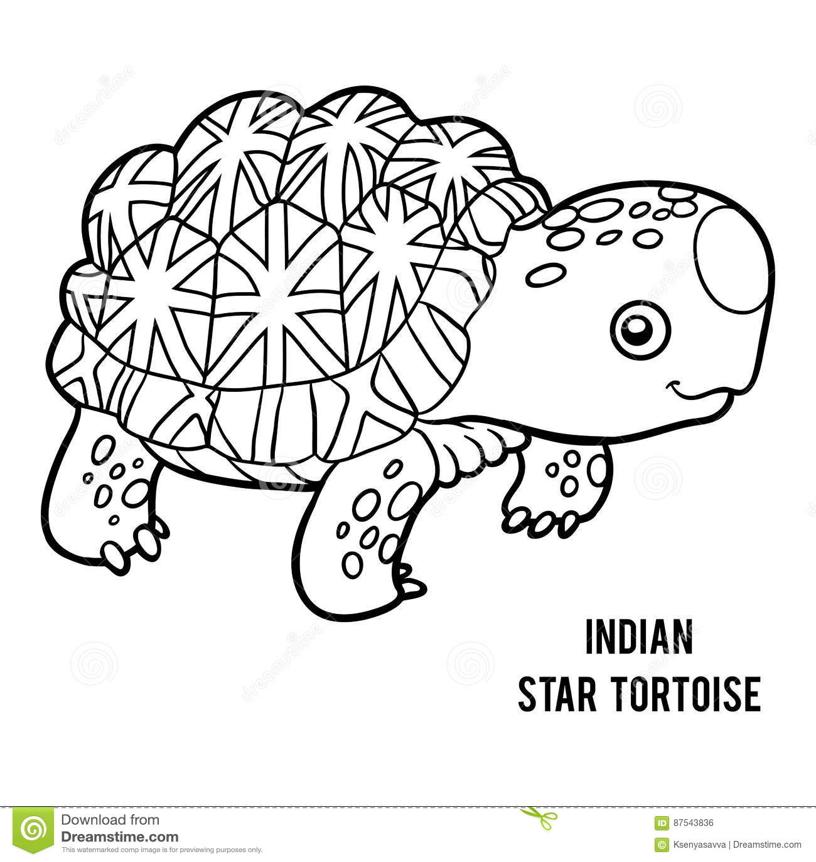 Indian Star Tortoise Cartoon Vector
