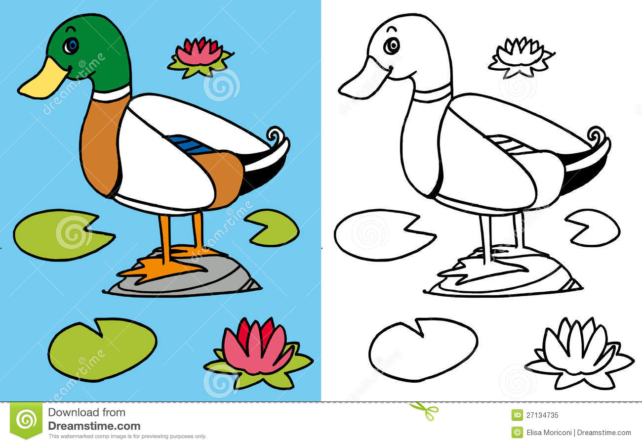 coloring book mallard royalty free stock photo