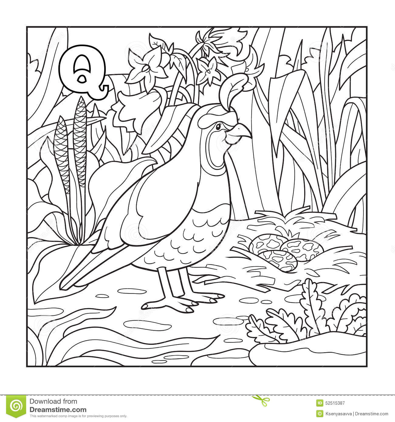 Free coloring pages quail