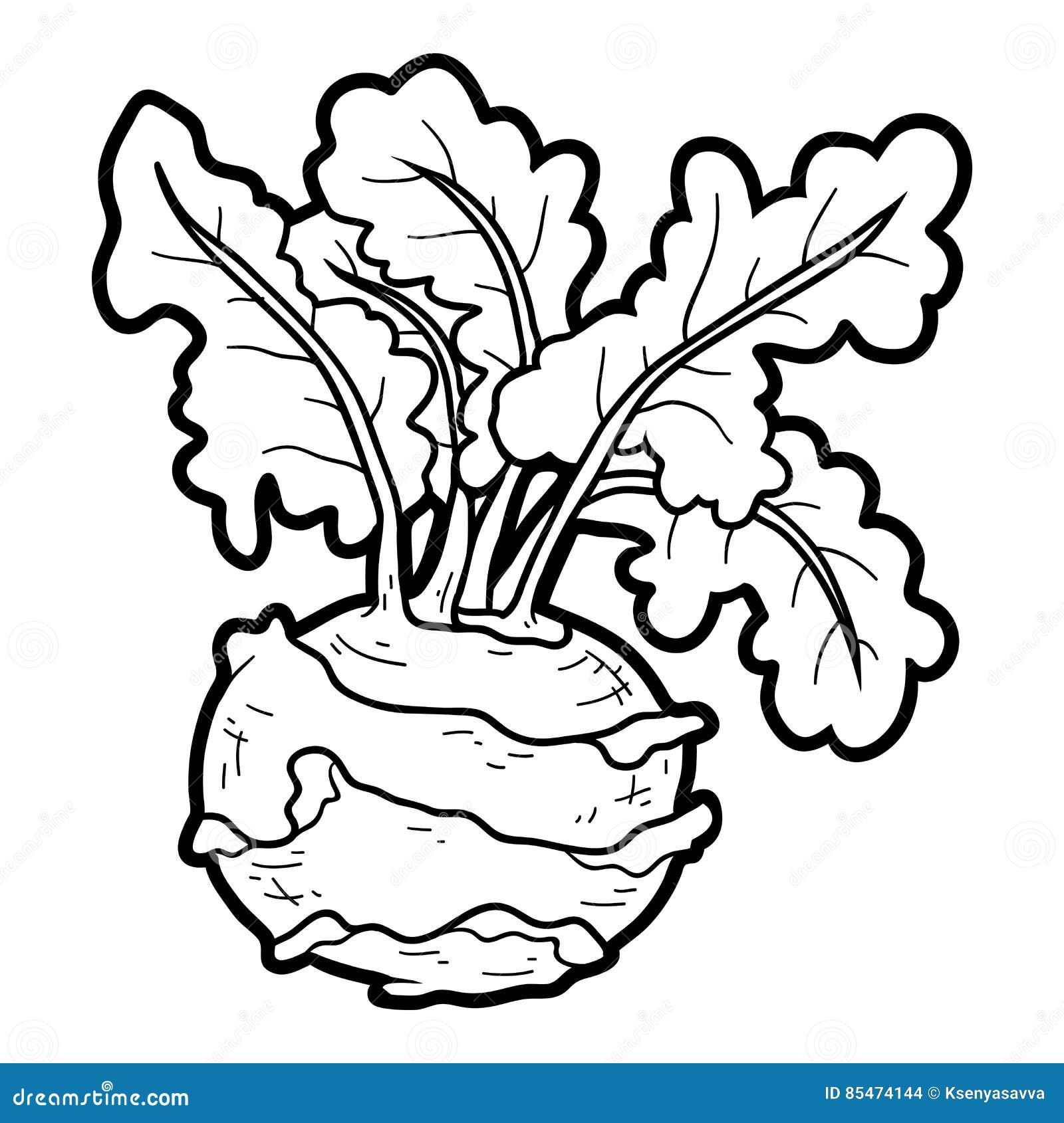 Coloring Book, Vegetables, Kohlrabi Stock Vector - Image ...