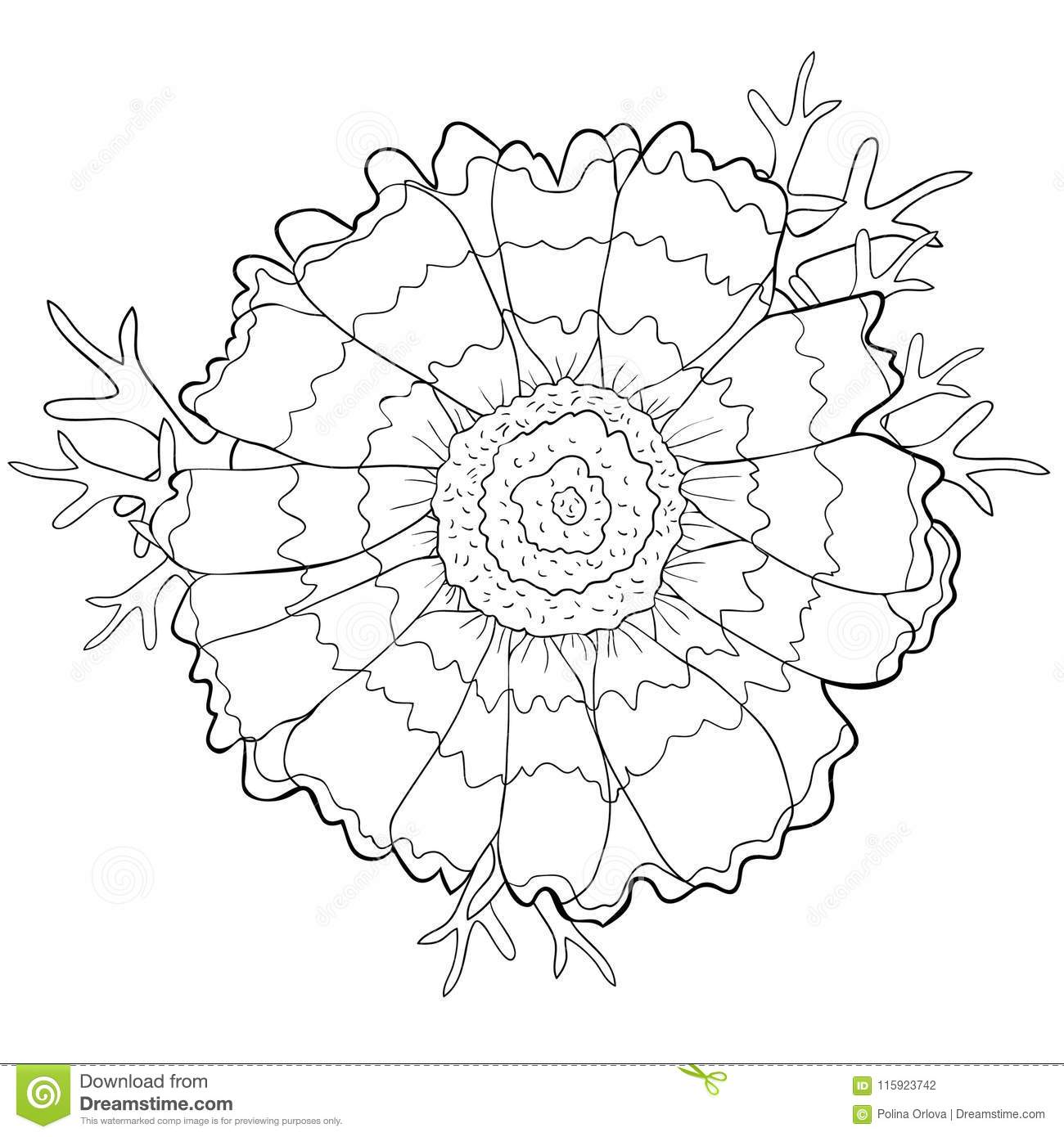 Coloring Flower Chrysanthemum Keeled Masquerade With Leaves. Vec ...