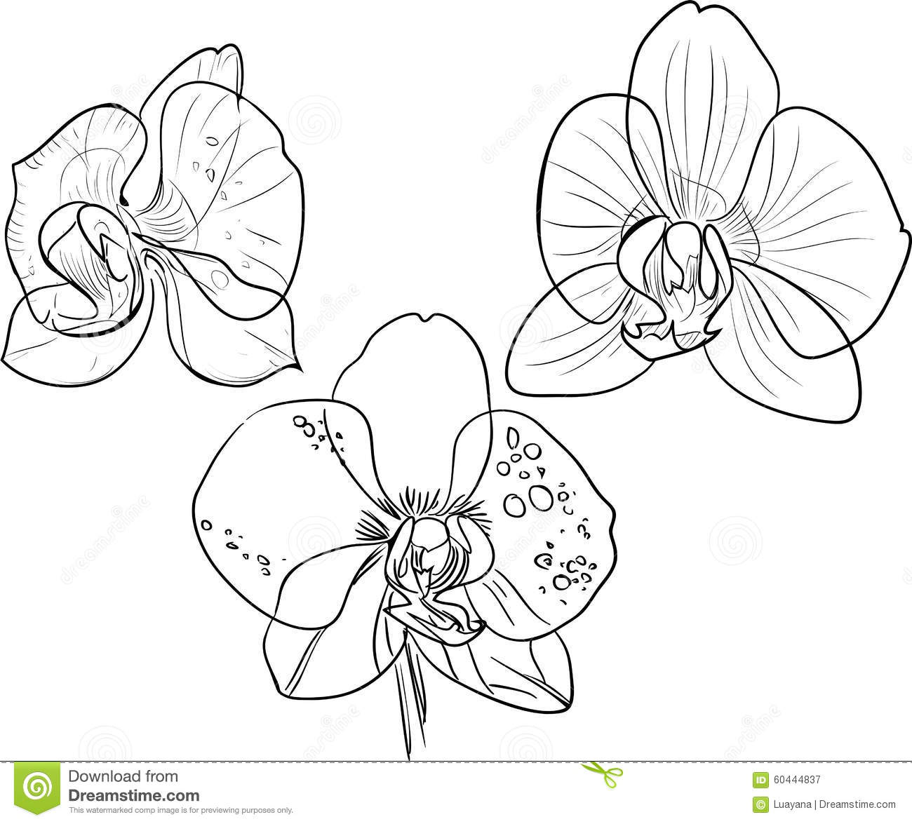 The Gallery For Gt Black Orchid Coloring Page Orchid Coloring Pages
