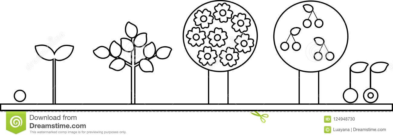 Coloring Page Life Cycle Of Cherry Tree Plant Growth Stage From - Seed-coloring-page