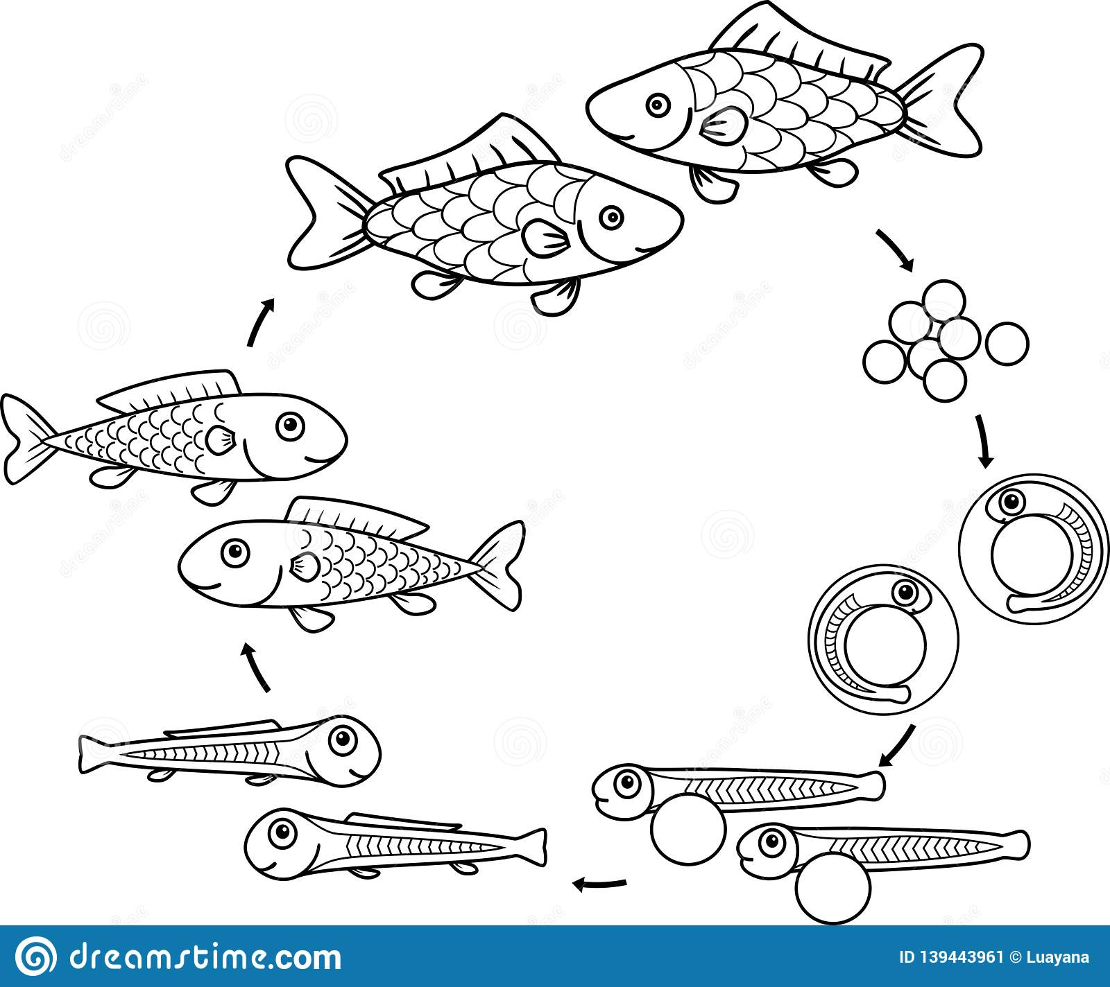 Coloring Page With Life Cycle Of Fish. Sequence Of Stages ...