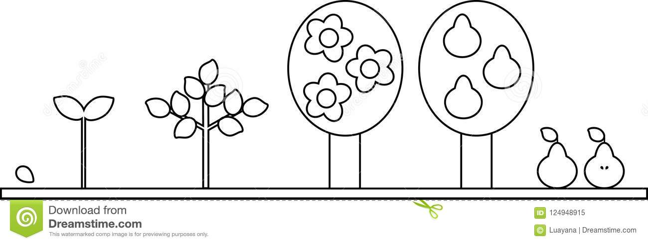 Free seed planting coloring pages | Free coloring pages, Free ... | 491x1300