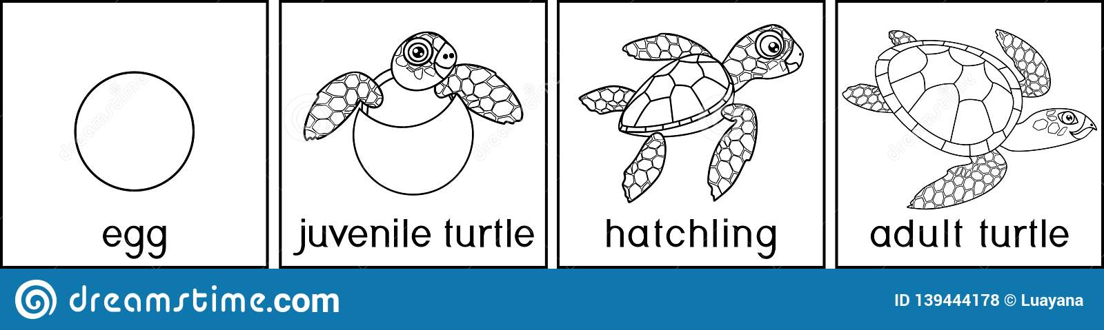 Coloring Page With Life Cycle Of Turtle. Sequence Of Stages ...