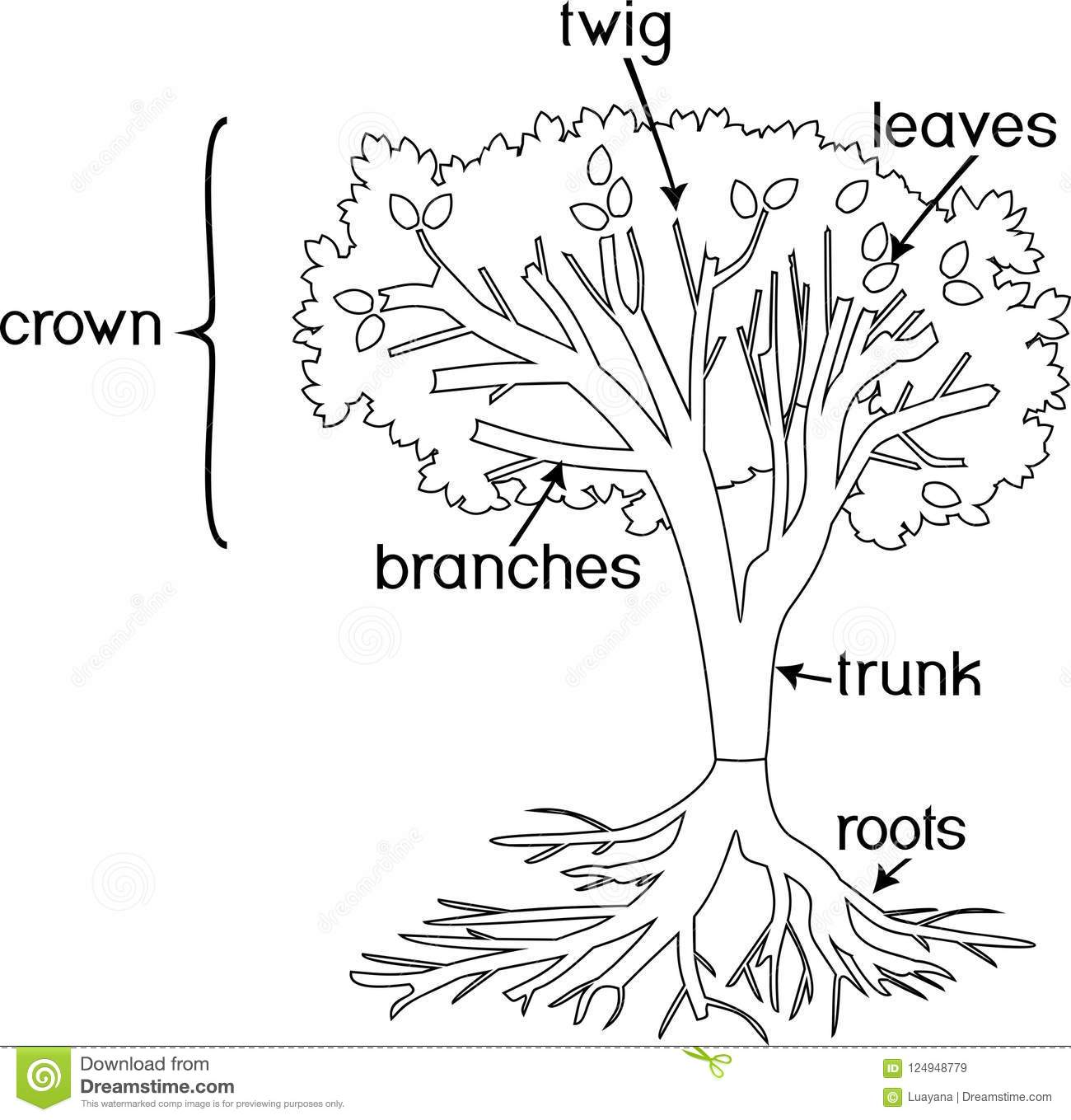 Coloring Page Parts Of Plant Morphology Of Tree With Crown Root