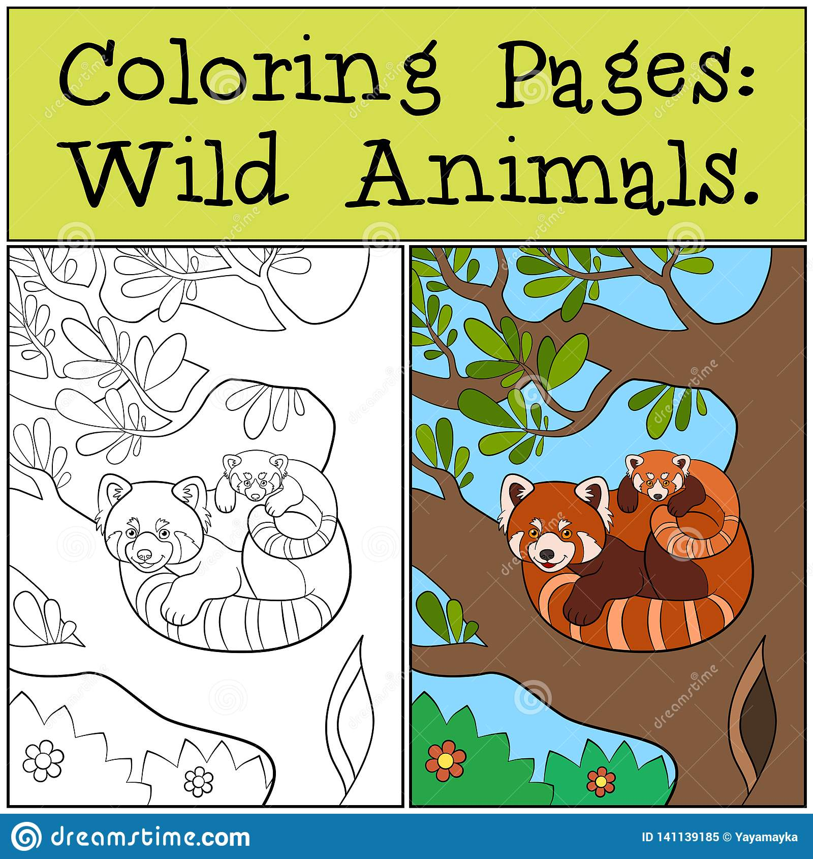 Coloring Pages Wild Animals Little Cute Red Panda Smiles Stock Vector Illustration Of Black Chinese 141139185