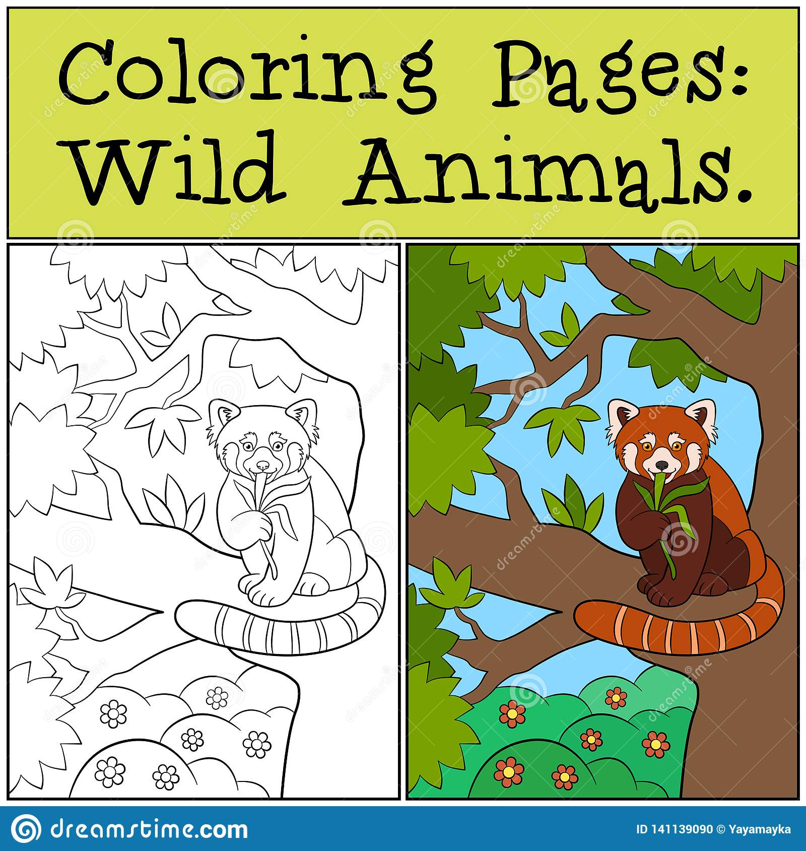 Coloring Pages Wild Animals Little Cute Red Panda Smiles Stock Vector Illustration Of Baby Bamboo 141139090