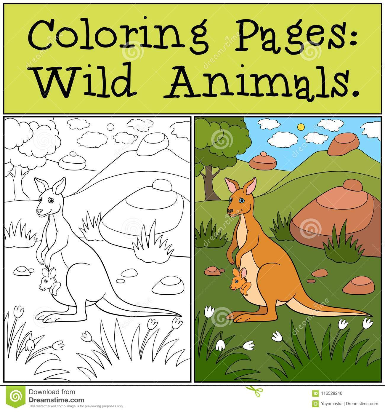 Coloring Pages Wild Animals Mother Kangaroo With Baby Stock