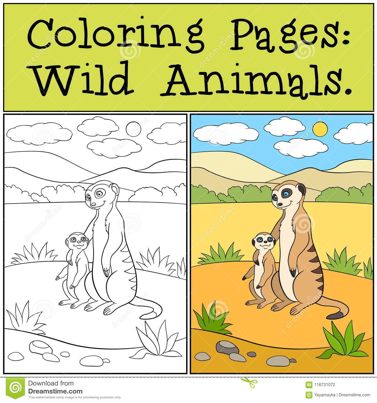 Coloring Pages Wild Animals Little Cute Meerkat Smiles