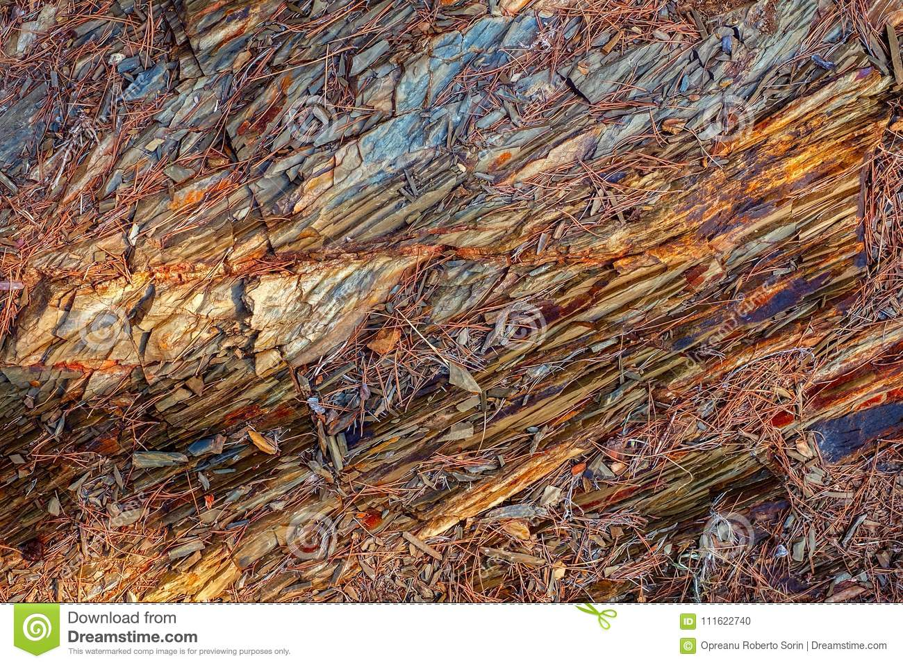 Coloring Rocks And Pine Needles Stock Photo Image Of Needles