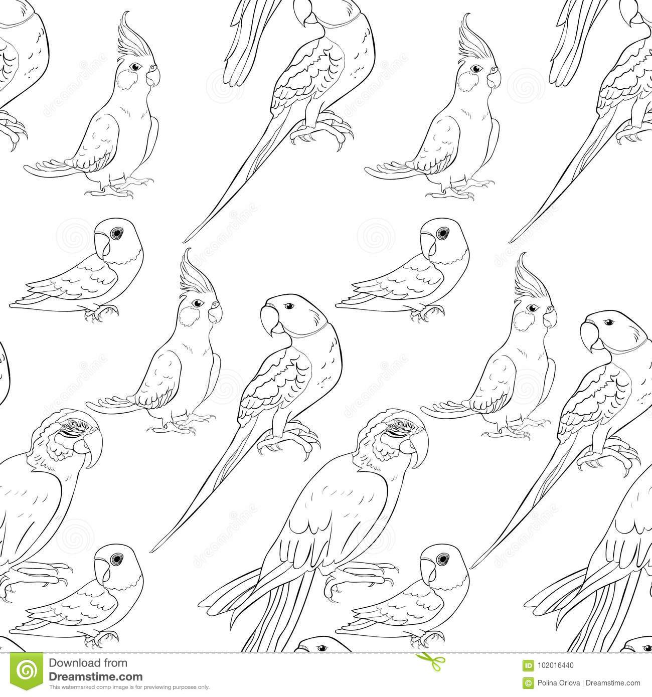 Download Coloring Seamless Pattern Parrot Ozherelovy Masked Lovebird Stock Vector