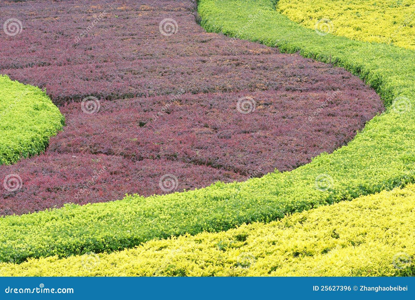 Colorized shrub