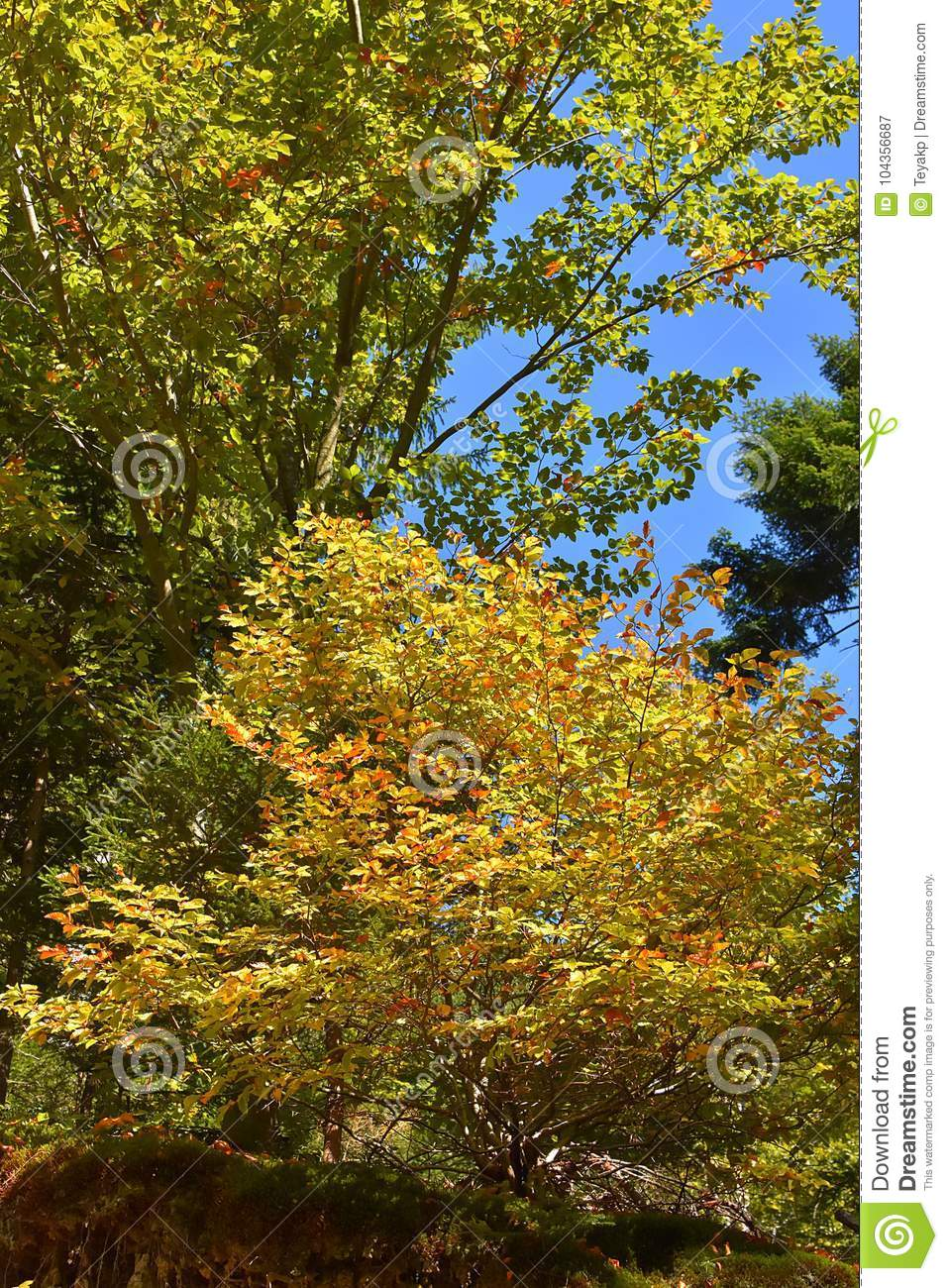 The colors of autumn in forest