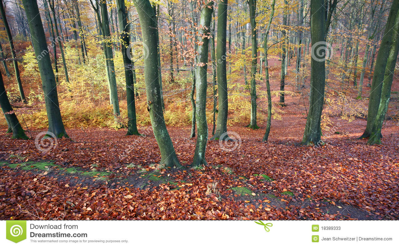 Colorul Wald