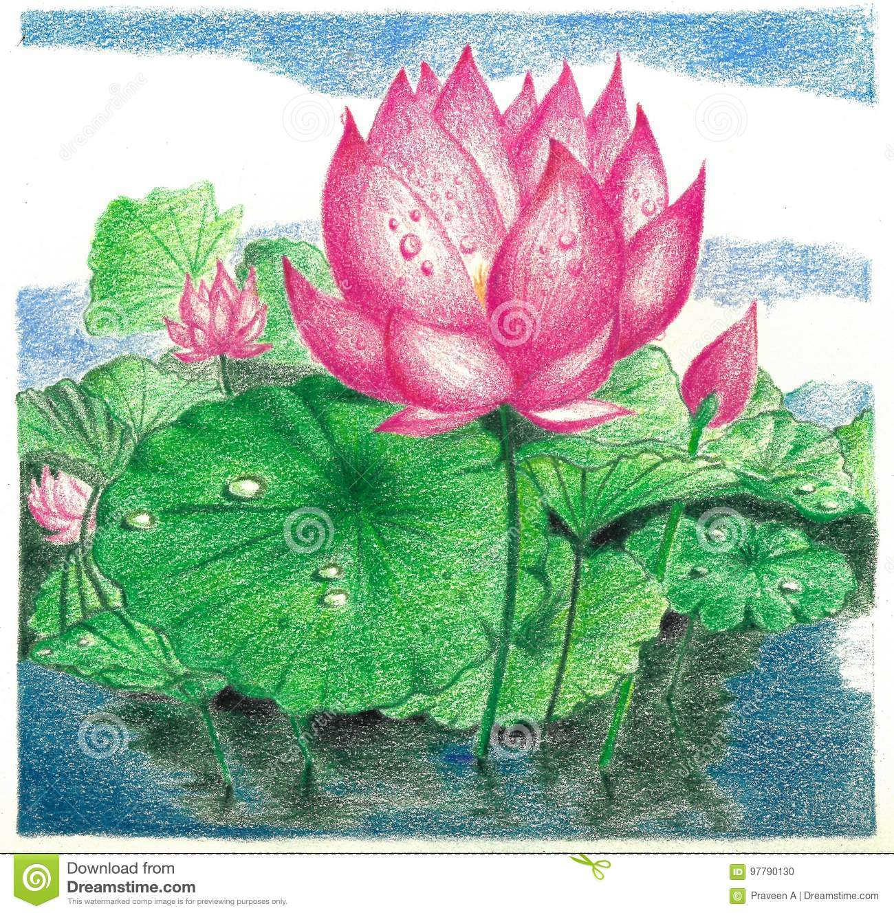A Colour Pencil Work Of A Lotus Flower In A Pond Stock Illustration
