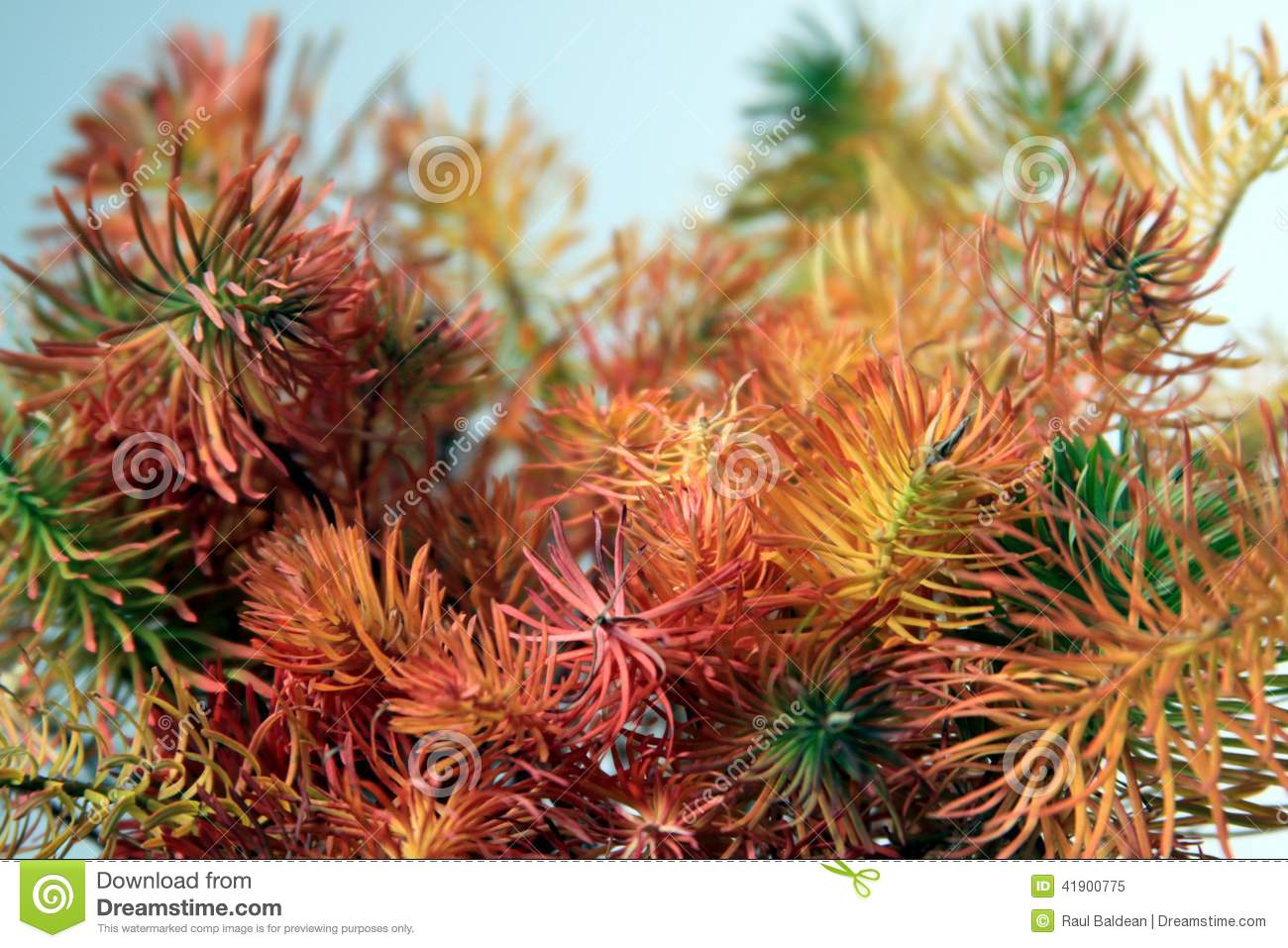 Coloured plants on white background 02