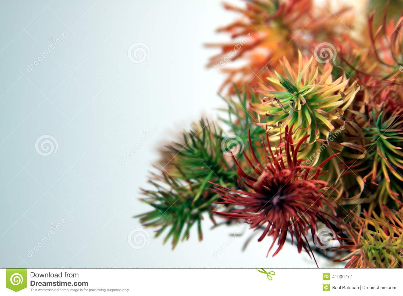Coloured plants on white background 03