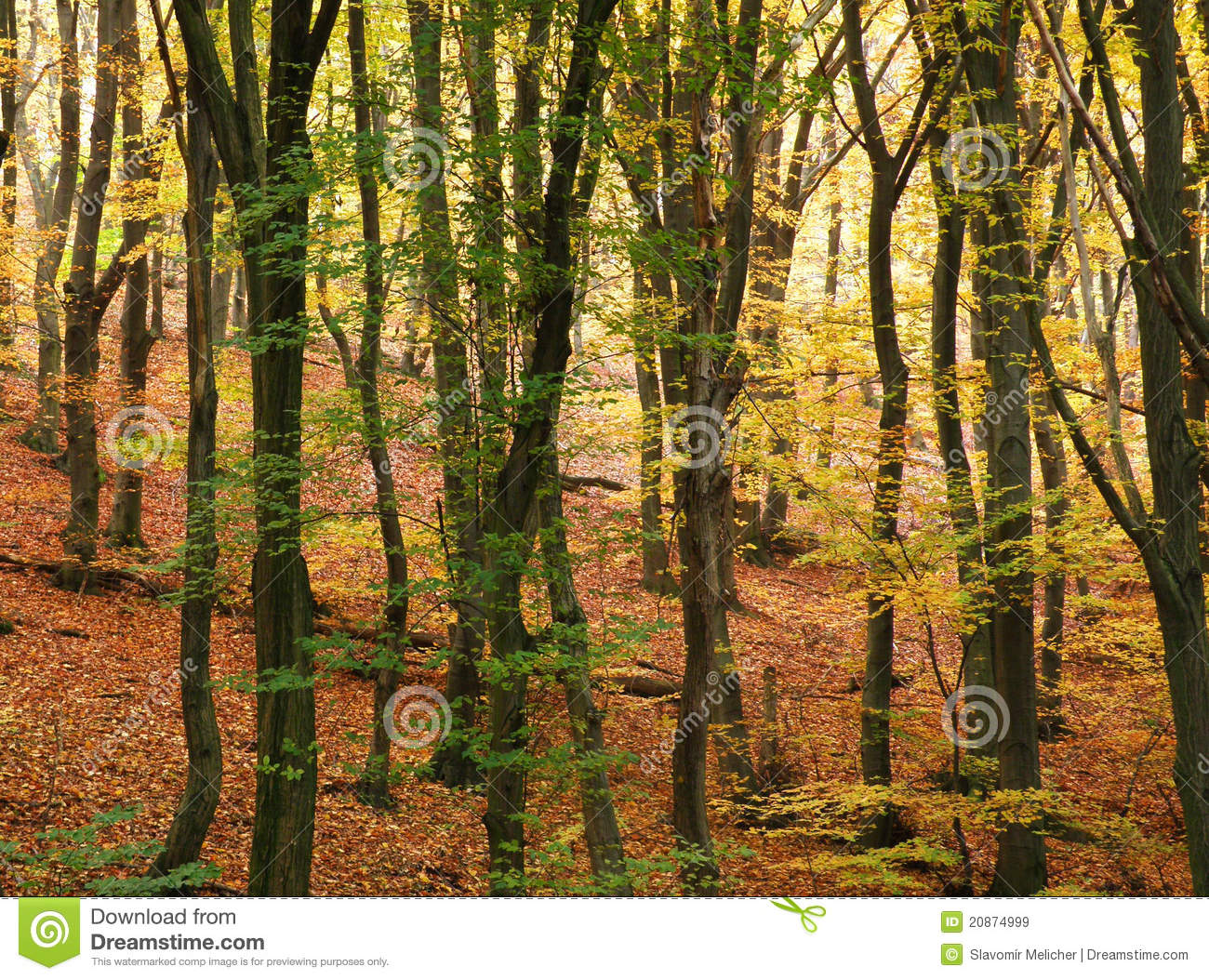 beech forest ecosystems The domesday book written in 1086 records that 20% of britain was covered by woodland and forest  with beech (fagus  are whole micro-ecosystems in their.