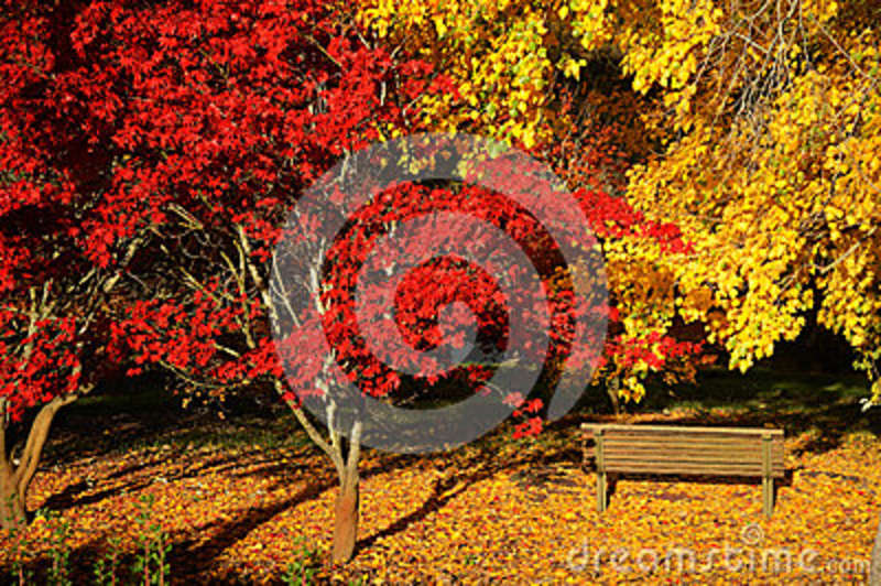 Colourful autumn in the botanic garden stock photo image for Landscape design adelaide hills