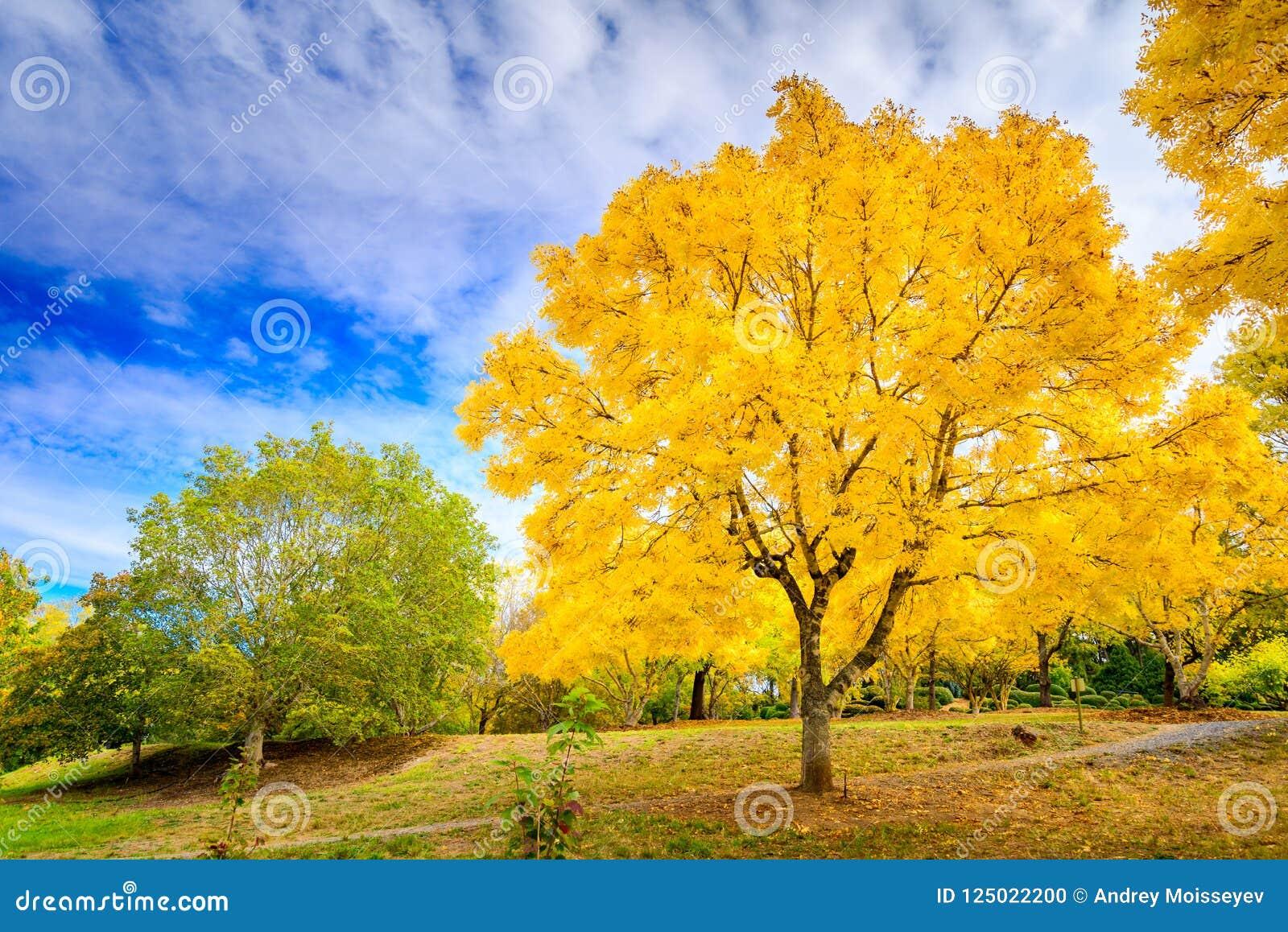 Australian Autumn In Mount Lofty, Adelaide Hills Stock Photo