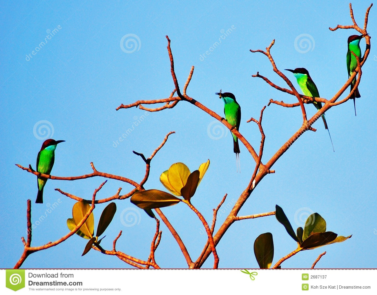 Colourful Birds On Tree Branch Stock Image - Image of ...