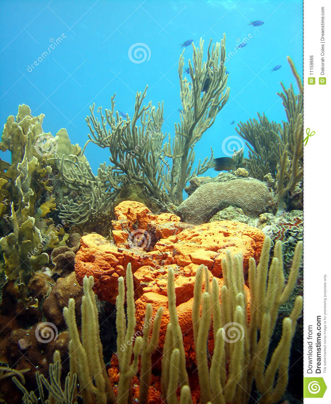 Coral Reef Background: Colourful Coral Reef Scene Stock Photo. Image Of Ocean